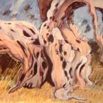 Olive Tree 1993